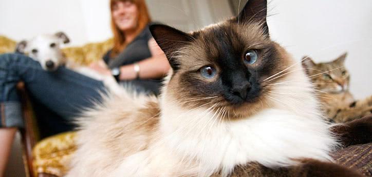 help cat kitten kitty adjust to new home