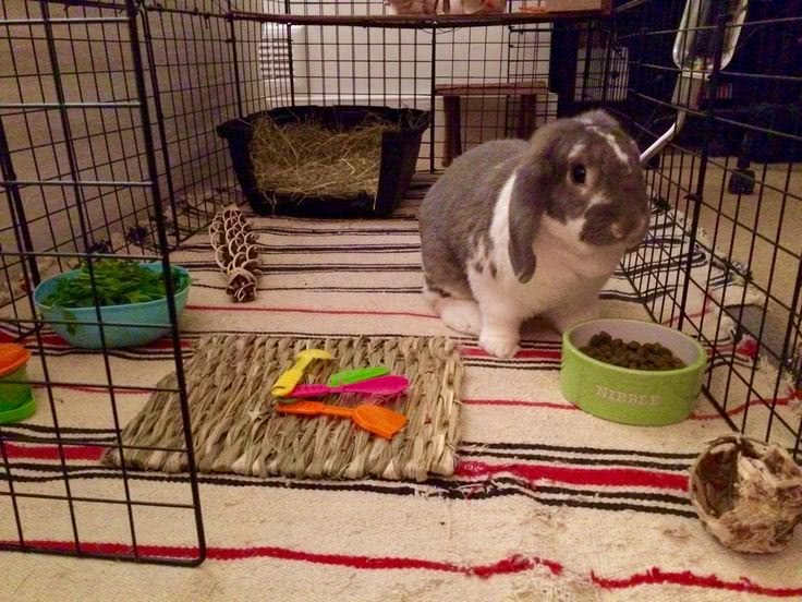 help rabbit bunny hamster mouse adjust to new home